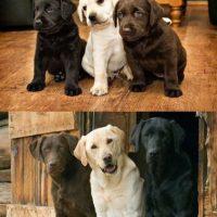 Los tres amigos varios años después Foto:Imgur