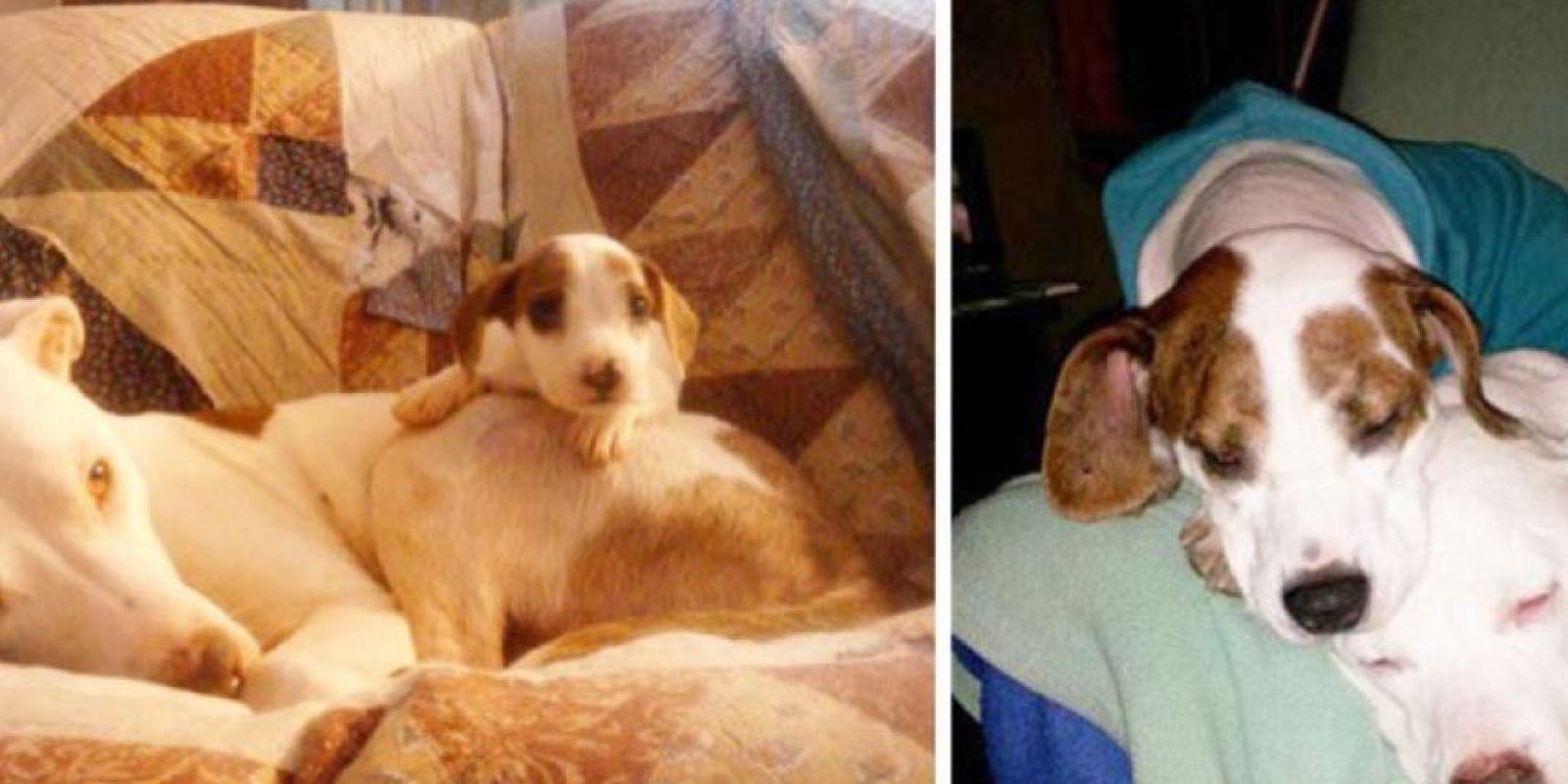 Tres años después Foto:Imgur