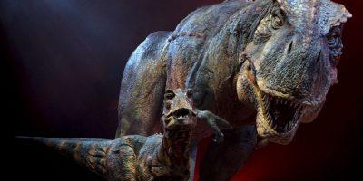 Chilesaurus diegosuarezi, pertenecía a la misma familia que el gigante carnívoro Tyrannosaurus rex pero el especimen era hervíboro Foto:Getty Images
