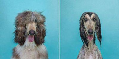 Fotos: Adorables perros antes y después de mojarse