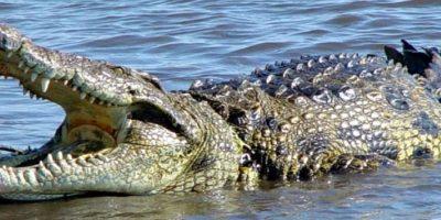 3. Una mujer australiana de 52 años se divorció porque prefiera a su mascota, un cocodrilo. Foto:Pixabay