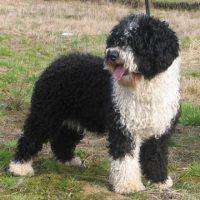 """Un usuario del foro """"Perros.com"""" mencionó que su novia lo dejó debido a que él tenía varios perros y exigían mucho tiempo. Foto:Pixabay"""