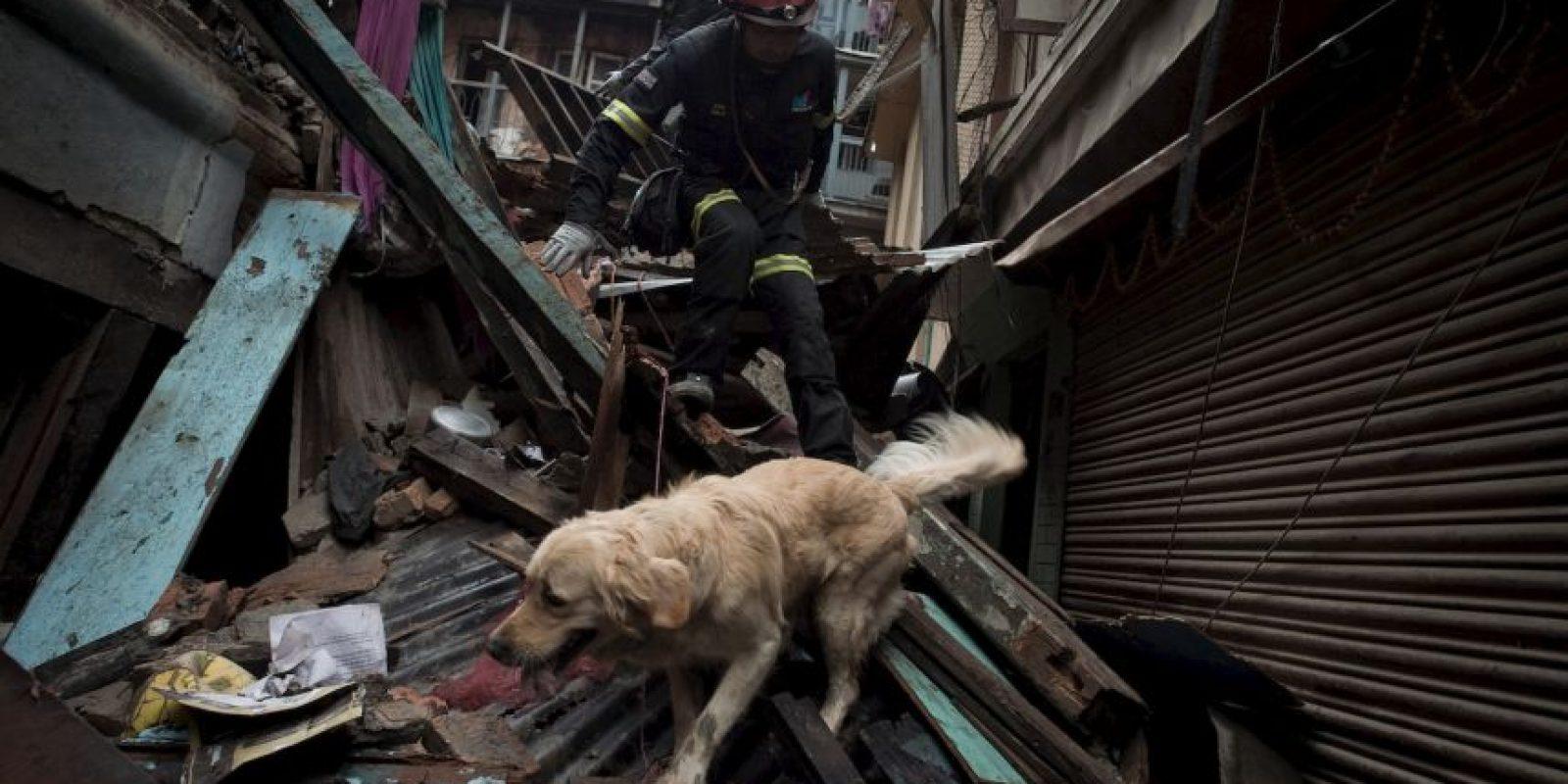 """3. Según el periódico español """"El Mundo"""", en esta ocasión los perros se han concentrado en Gorkha, donde fue el epicentro del terremoto. Foto:AFP"""
