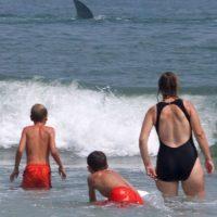 1. Los primeros tiburones existieron antes que los primeros árboles. Foto:Getty Images