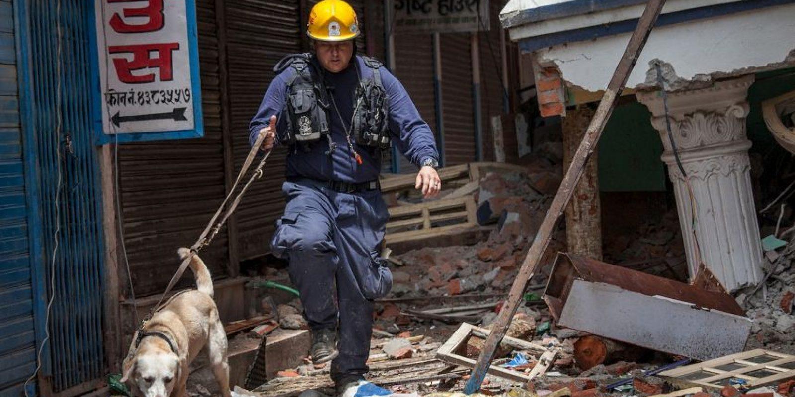 1. Perros rescatistas de diversos países han sido llevados a Nepal para ayudar. Foto:Getty Images