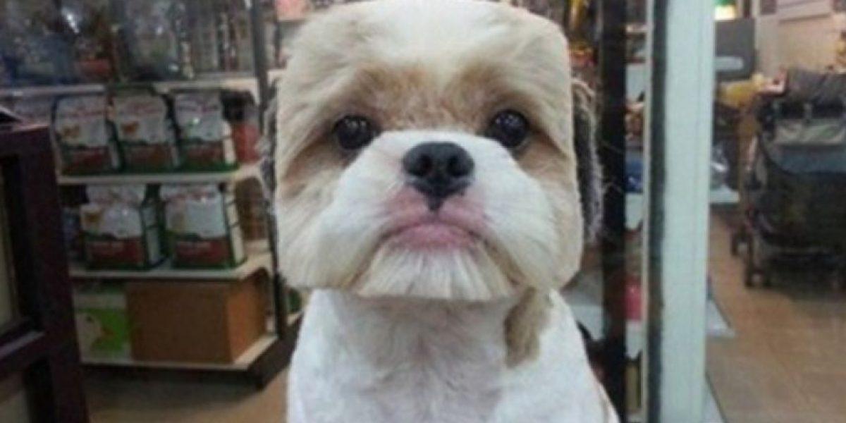 FOTOS: ¿Ustedes lo harían? Este es el nuevo look para perros en Taiwán