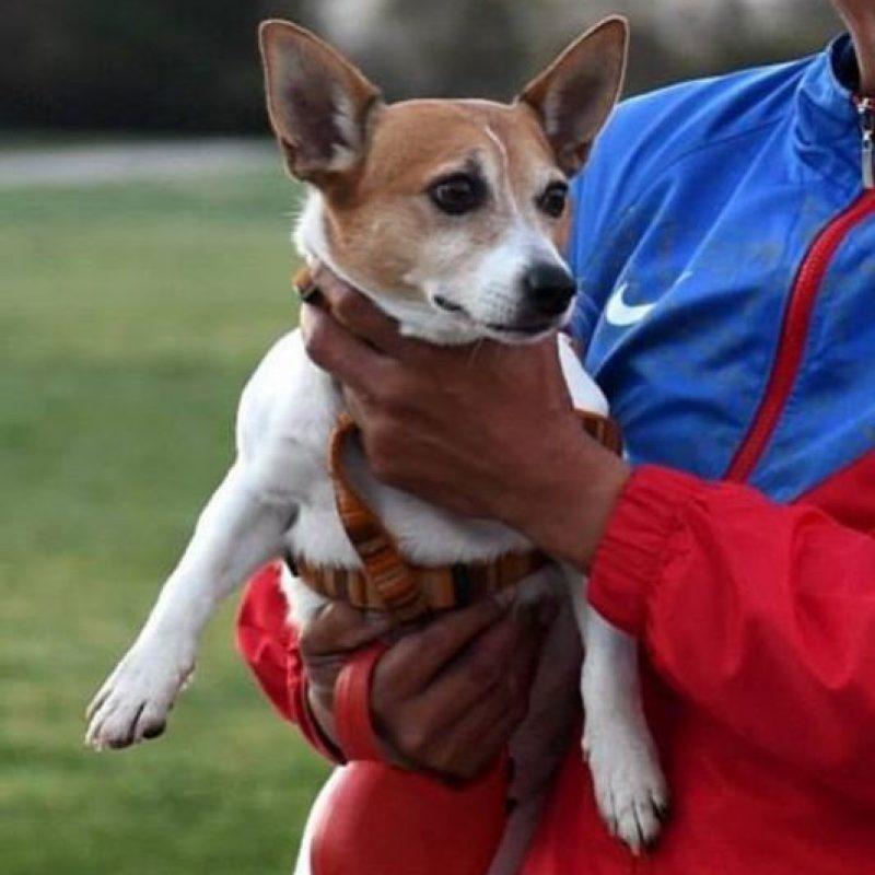 """La mascota de Manny se llama """"Pacman"""", el cual también es su apodo. Es un perro de raza Jack Rusell Terrier de nueve años y acompaña al boxeador a correr y a sus entrenamientos. Incluso, el perro tiene su propia tarjeta de """"viajero frecuente"""" pues suele acompañar al pugilista en sus numerosos viajes. Foto:Vía instagram.com/MannyPacquiao"""