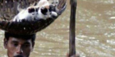 Este hombre rescató a unos gatitos de ahogarse. Foto:vía Tumblr