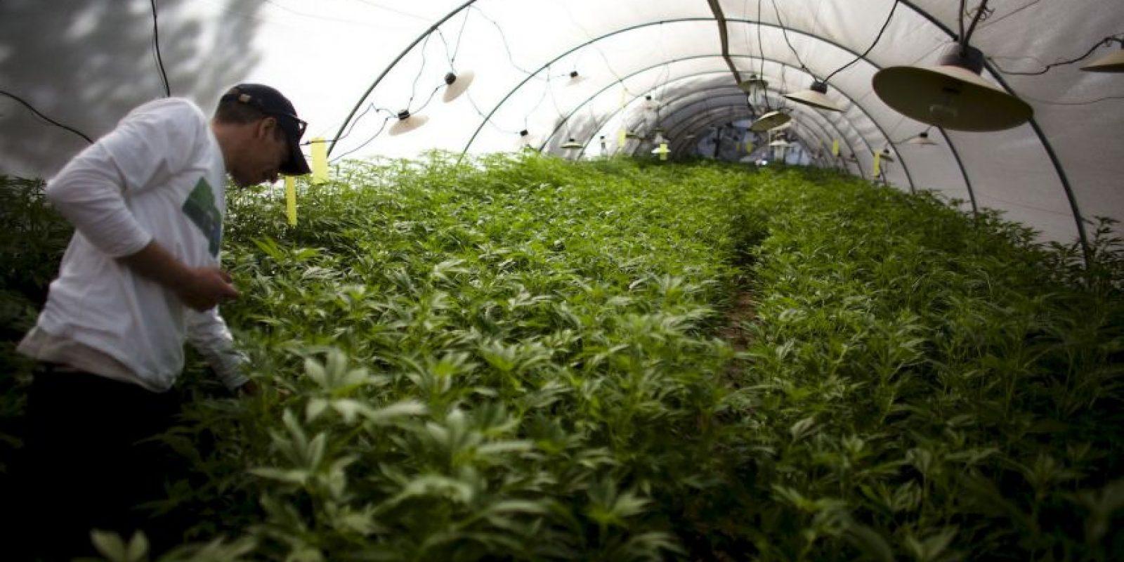 Permite el consumo de marihuana con fines médicos y tiene diversos dispensarios para esos propósitos. Foto:Getty Images