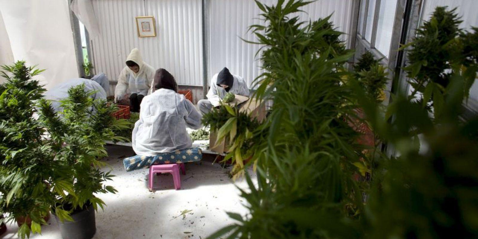 4. Existe la marihuana medicinal pero se ha indicado que pocos médicos la recetan por falta de información. El Gobierno solo ha autorizado formalmente a una empresa para suministrar la marihuana a las farmacias. Foto:Getty Images