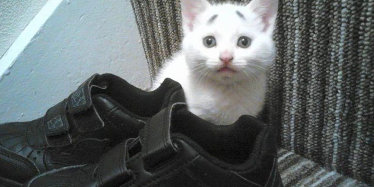 FOTOS: El gato con cejas que puede quitarle el trono al