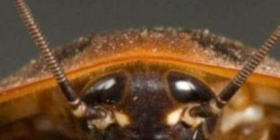 También cucarachas. Foto:vía Youtube