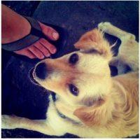 En julio de 2010, Kevin Systrom, fundador de la plataforma, compartió una imagen donde se observa el pie de su novia y a un perro que se encontró mientras estaba en un puesto de tacos. Foto:instagram.com/kevin