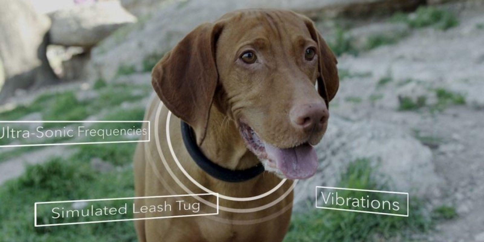 4. ¿Podría el perro desarrollar una reacción alérgica al collar? Foto:DogTelligent