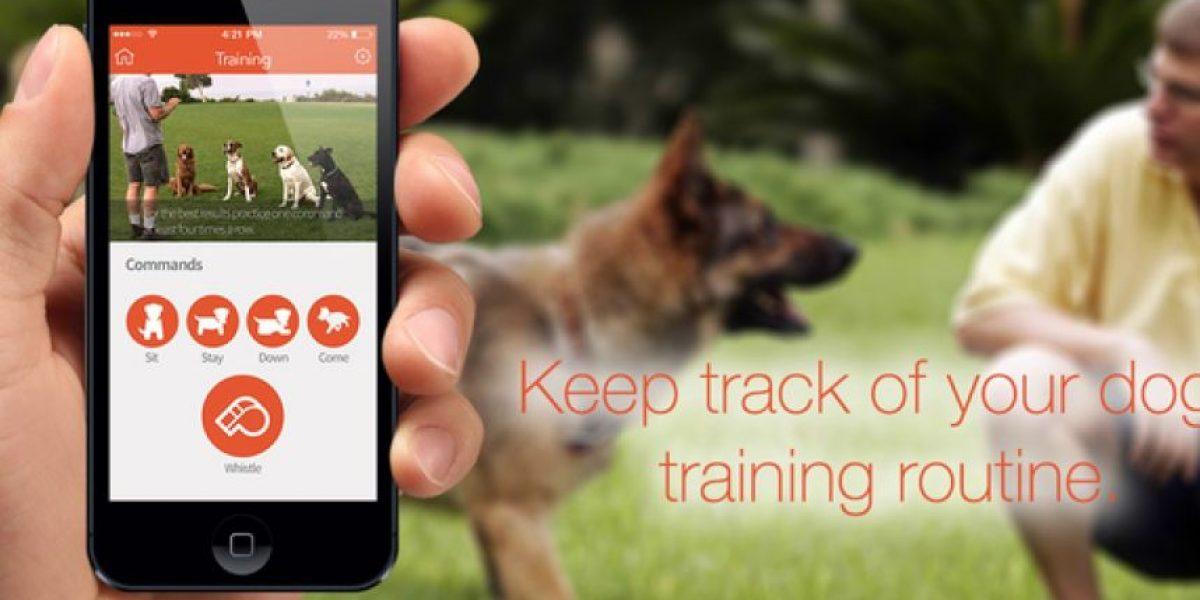 Este es el collar inteligente que mantiene a tu perro en línea