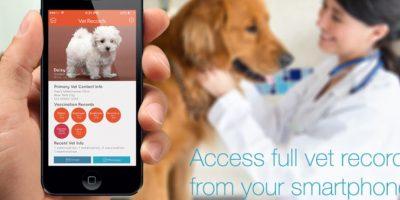 """El gadget emite las mismas frecuencias que un teléfono móvil. Algunos estudios dicen que los dispositivos de telefonía móvil y Bluetooth son peligrosos, mientras que una misma cantidad de estudios dice lo contrario. Sobre la base de nuestra investigación y desarrollo, hemos tomado todas las medidas para asegurar que el """"Connected Collar"""" sea lo más seguro para nuestros perros como un teléfono celular es para los seres humanos. Foto:DogTelligent"""