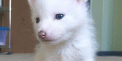 FOTOS: Esta adorable zorrita blanca los hará derretirse de amor