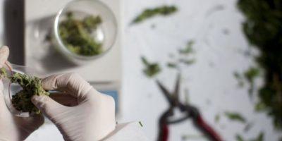 Alaska, Arizona, California, Colorado, Hawai, Maine, Michigan, Montana, Nevada, Nuevo México, New Jersey, Oregon, Vermont, Rhode Island y Washington permiten el consumo de la marihuana con fines medicinales. Foto:vía Getty Images