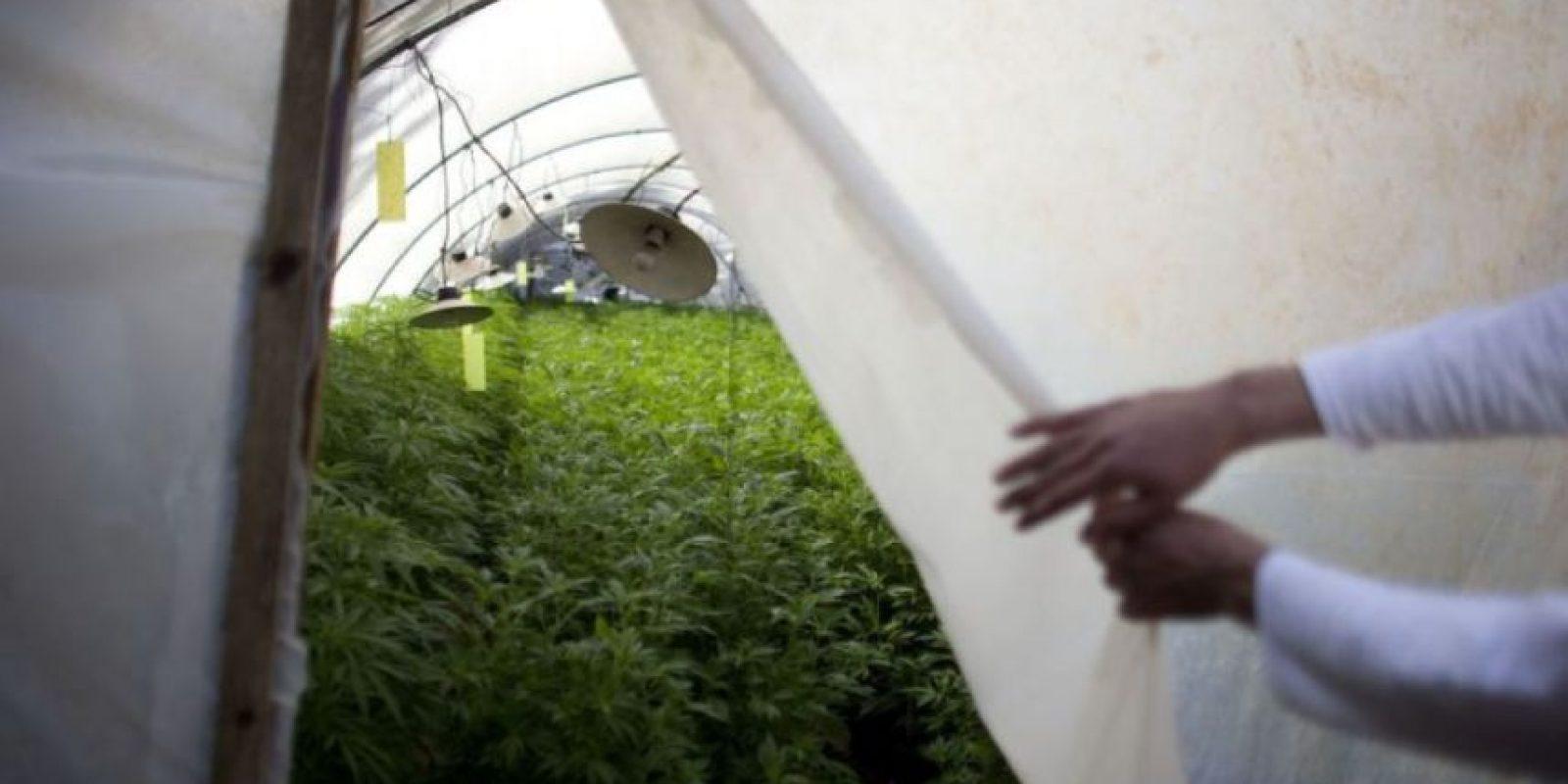 Se convirtió en el primer país de América Latina en legalizar el consumo de marihuana con fines médicos. El país actualmente cuenta con plantaciones destinadas al tratamiento de pacientes de cáncer. Foto:vía Getty Images