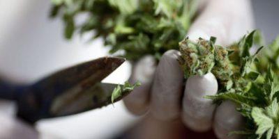 Permite el consumo de marihuana con fines médicos y tiene diversos dispensarios para esos propósitos. Foto:vía Getty Images