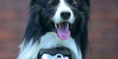 Esta cámara disparará solo cuando su perro esté emocionado