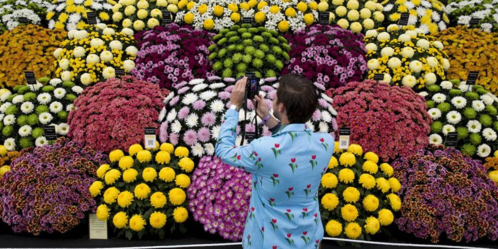 Gran Pabellón en el 2015 Chelsea Flower Show de Londres . Foto:AFP