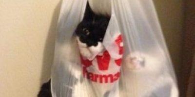 FOTOS: La curiosidad le trajo problemas a este gato, miren por qué