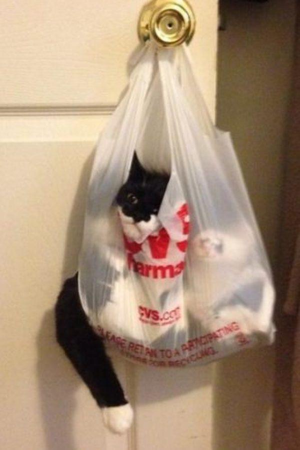 Vaya que este gato fue curioso, pues sus dueños lo encontraron así Foto:Imgur