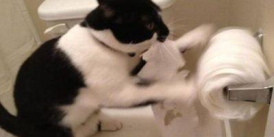 Al parecer les encanta el papel higiénico Foto:Vía Youtube