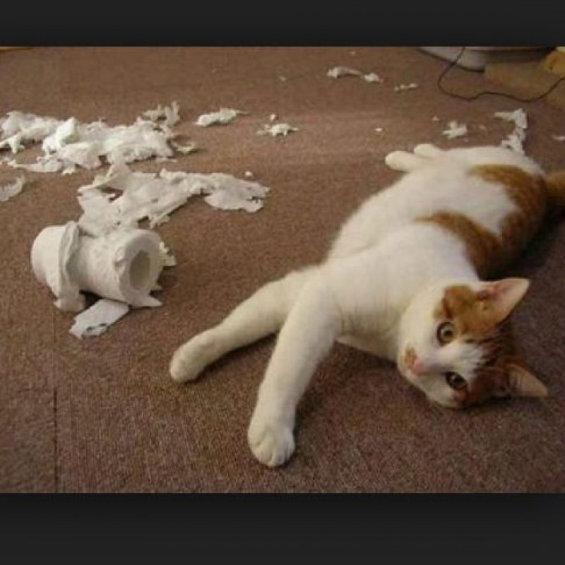 Foto:Tumblr.com/Tagged/gatos/traviesos