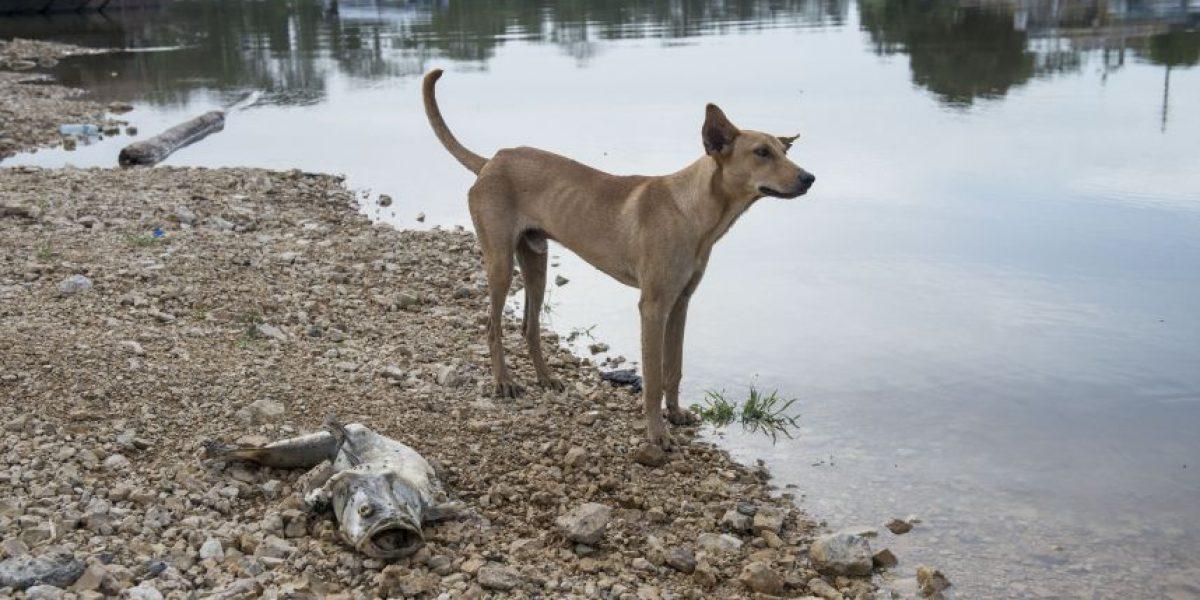 #RíoLaPasión: La mayor catástrofe ambiental en décadas