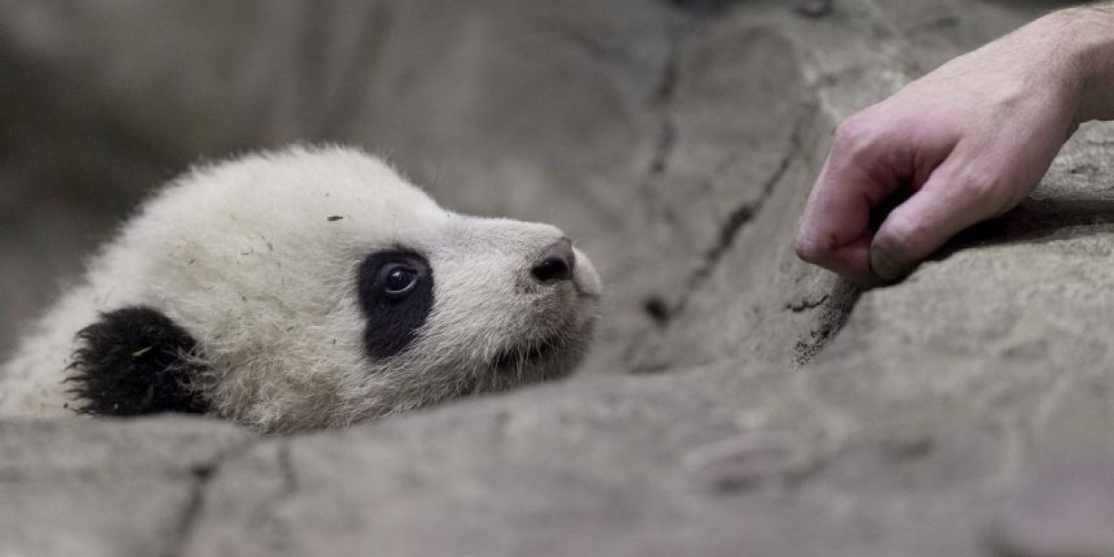 El hostigamiento a la vida silvestre incluye incomodidad para el animal causada por ruido o molestia física, compartió el sitio: Centro de Internet para la Gestión de Daños a la Fauna, Icwdm.org. Foto:Getty Images