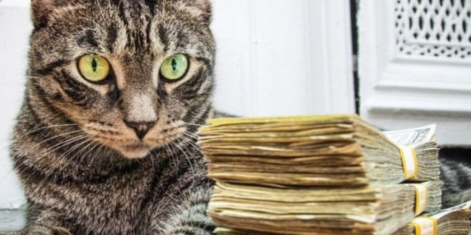 Foto: Instagram.com/Cashcats