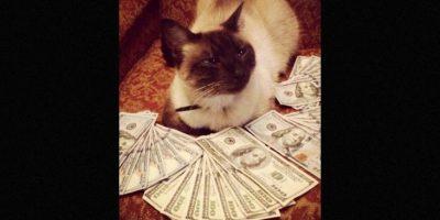 Foto:Instagram.com/Cashcats