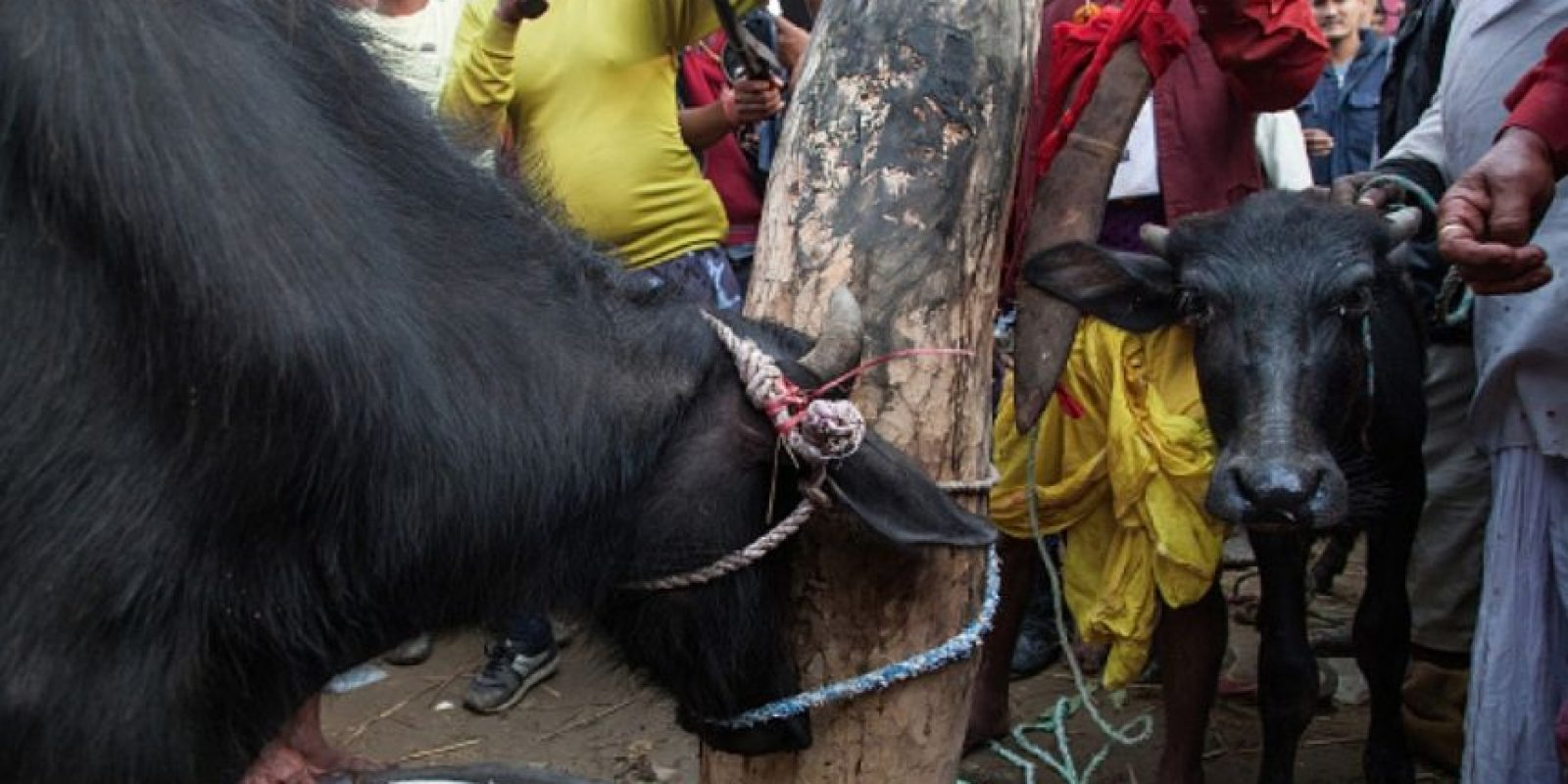 2. Festival Gadhimai Foto: Getty Images