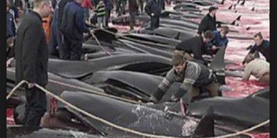 6. Matanza de delfines en Dinamarca Foto:Vía Youtube