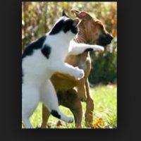 La típica pelea entre perros y gatos Foto:Tumblr.com/Tagged/pelea/animales