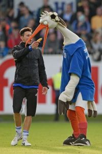 Esta peculiar ave es la mascota del Holstein Kiel de Alemania. Foto:Getty Images