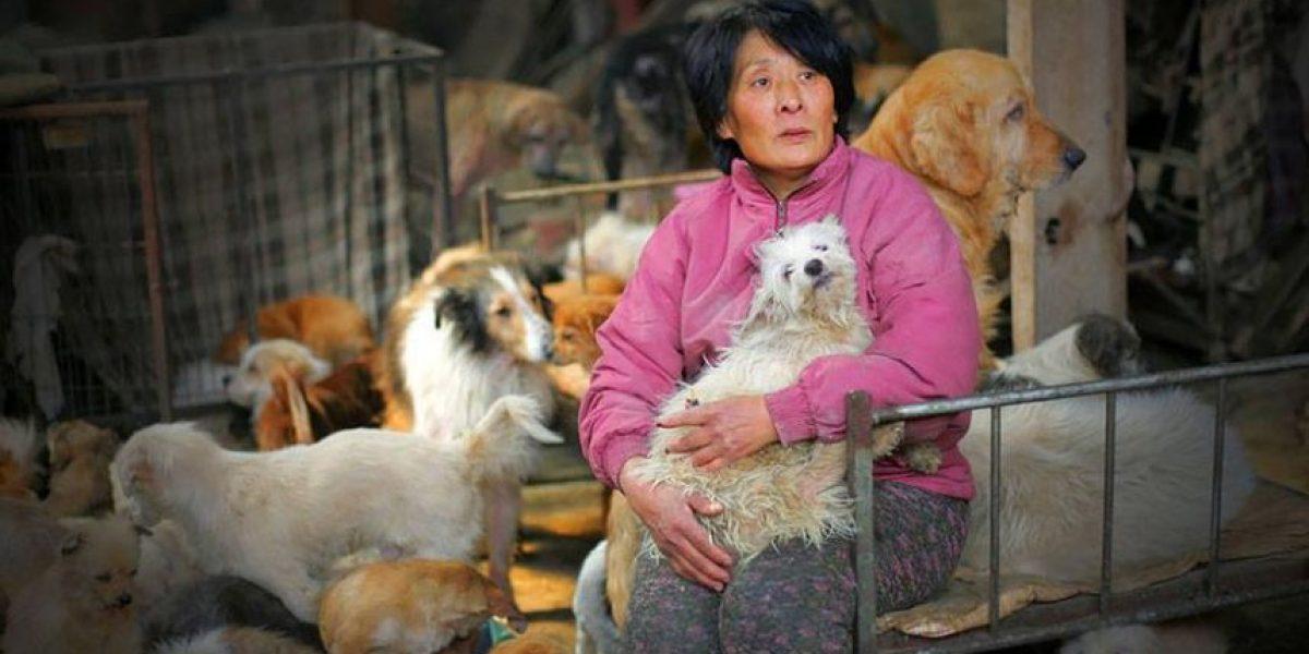 FOTOS. Ella es Yang Xiaoyun, la mujer que salvó a 100 perros de ser comidos