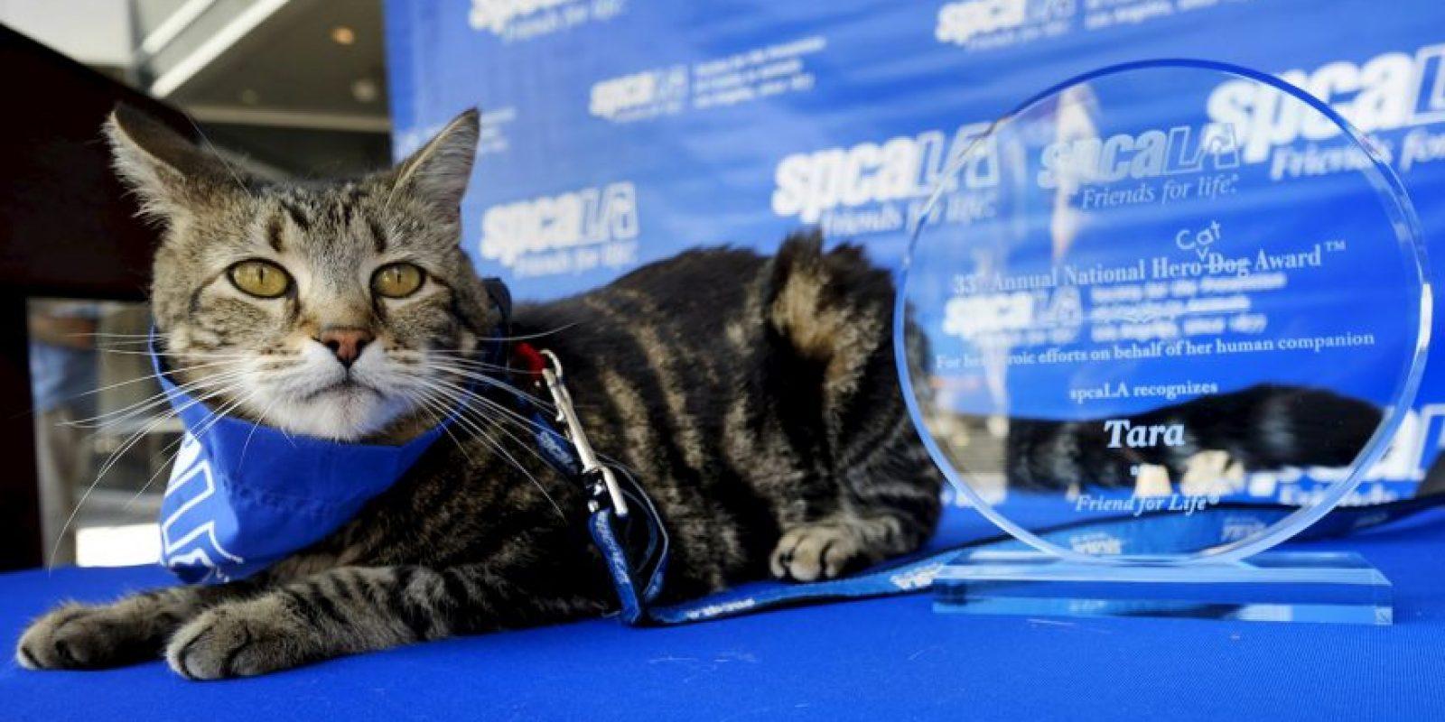 """Tacharon la palabra """"perro"""" del reconocimiento para ponerle """"gato"""" Foto:AP"""