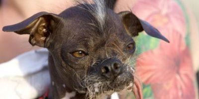 Los propietarios de estos perros piensan que la fealdad de dus mascotas puede brindarles un título muy codiciado. Foto:Getty Images