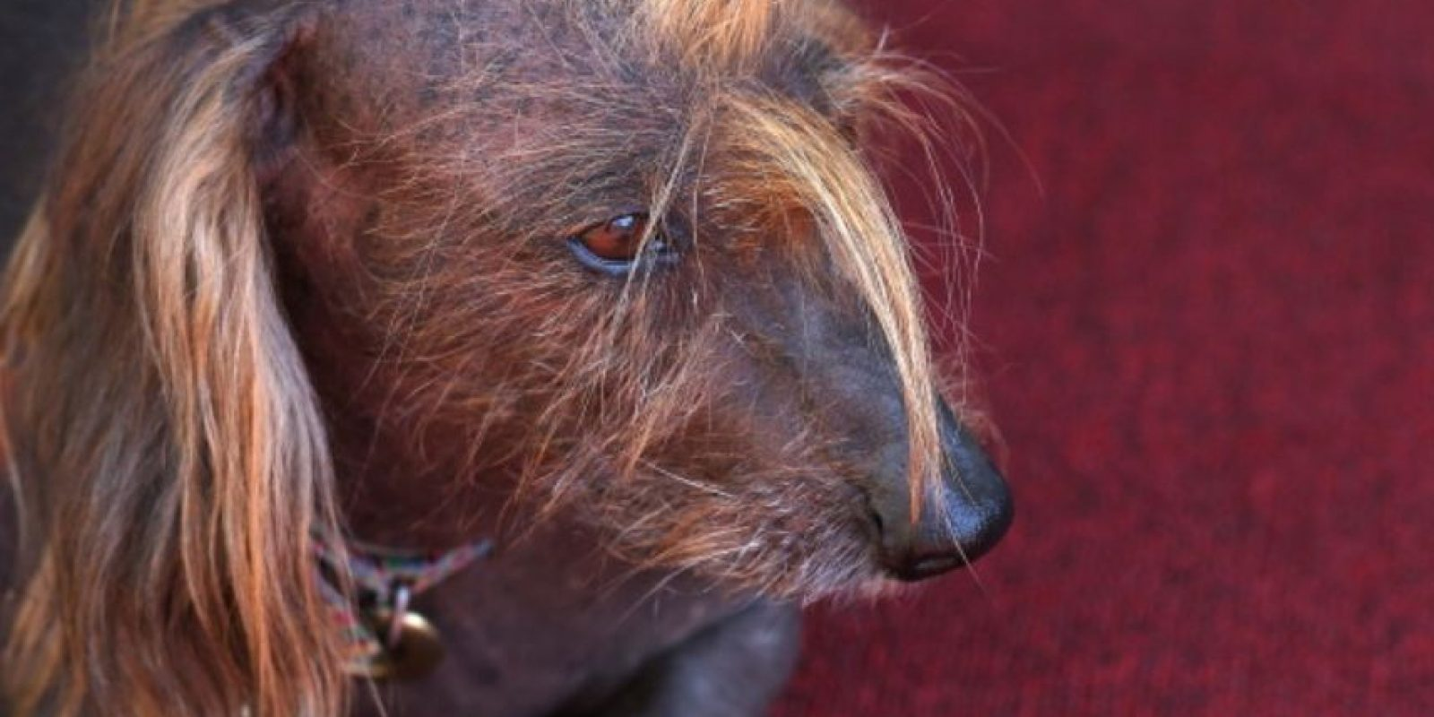 El ganador del año pasado poseía unos dientes protuberantes y su piel era abultada. Foto:Getty Images