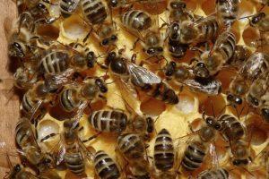 4. ¿Las abejas silvestres proporcionan enormes beneficios económicos? Foto:Pinterest