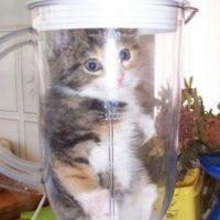 ¿Los gatos? Foto:Reddit