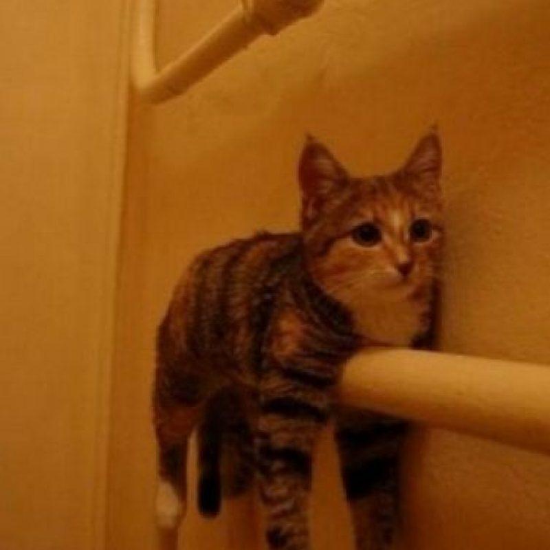 Los gatos siempre suelen meterse en aprietos Foto:Reddit