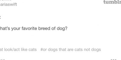 8. En Tumblr nadie le gana. Acá dice que ama a los gatos. Foto:vía Tumblr/taylorswift