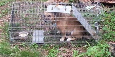 Mientras que este perro pasó por un gran coraje Foto:Reddit