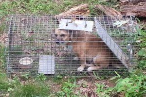 Así fue la cara del perrito al ser descubierto Foto:Reddit
