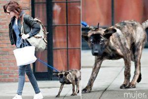 Kristen Stewart Foto:Agencias