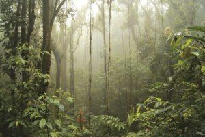 Corredor Biológico del Bosque Nuboso Foto:Conap